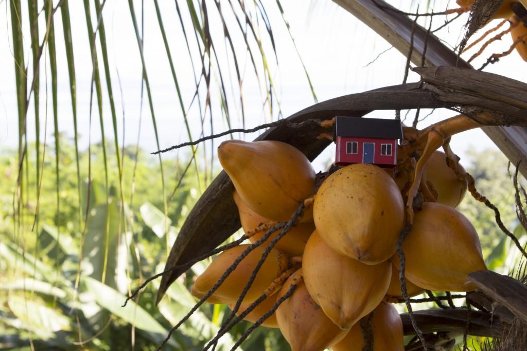 Haus with Coconut tree. On Honiara, Salomon Islands by Tim Vistarini.