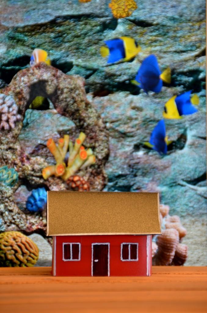 U-house Coral Test