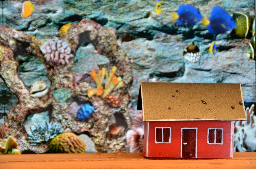 U-house Coral test 2